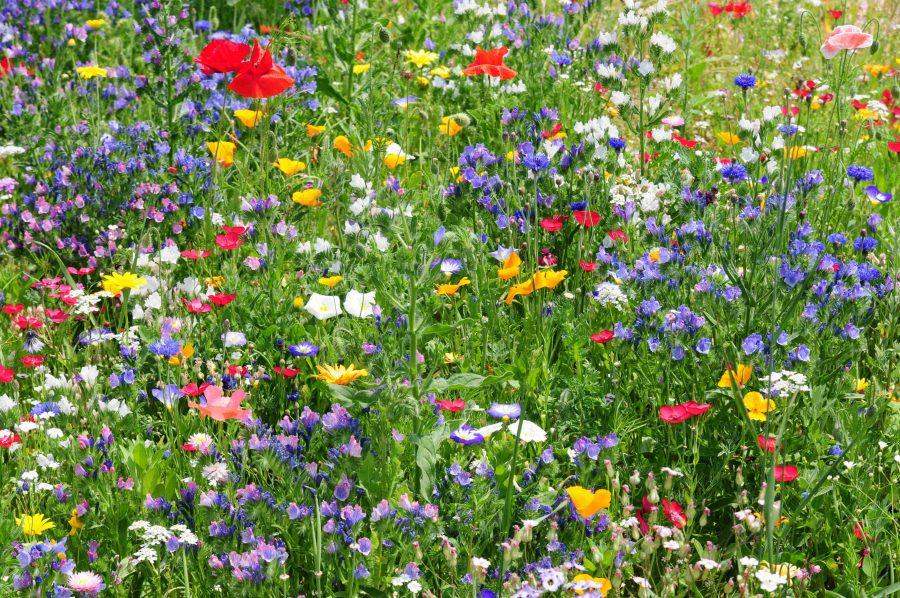 bloemenweide goed voor de bij
